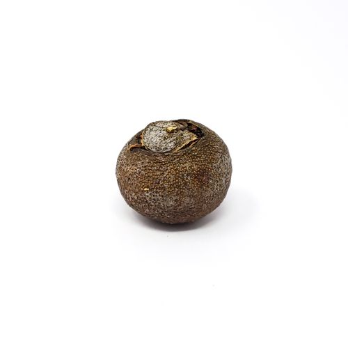 tangerina-5